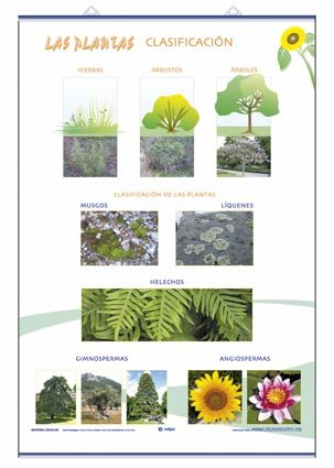 Lamina crecimiento plantas/clasificacion d/c (70x100)