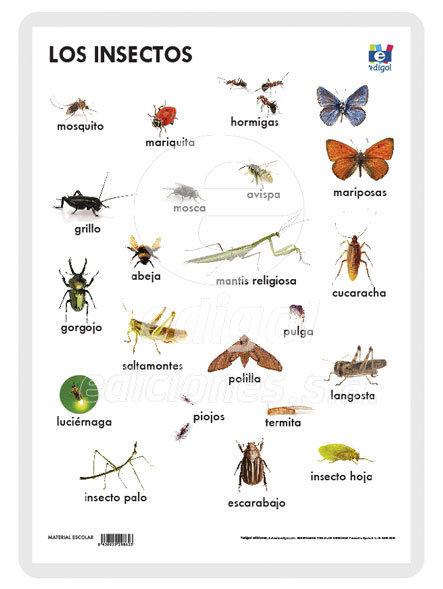 Lamina a3 primaria los insectos (42x29) naturaleza