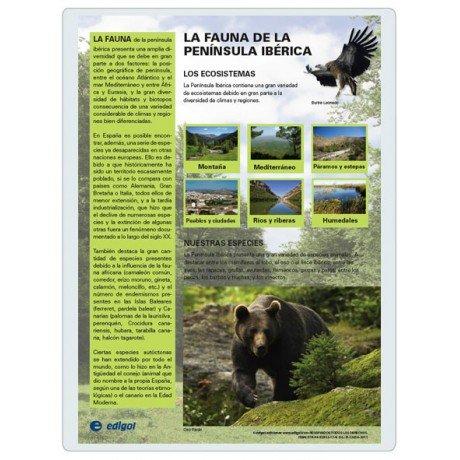 Lamina a3 eso fauna iberica (42x29) ciencias y ecologia