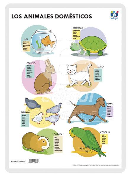 Lamina a3 infantil animales domesticos (42x29) me gusta sab