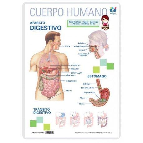 Lamina a3 primaria aparato digestivo (42x29)
