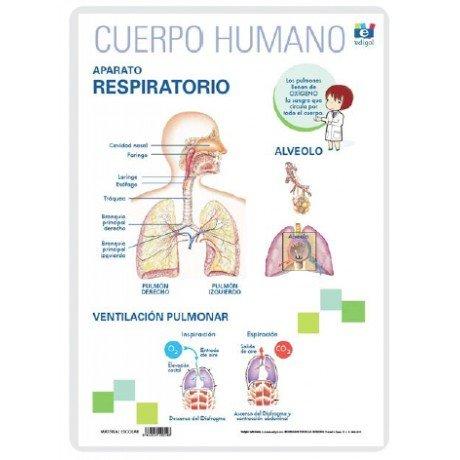 Lamina a3 primaria aparato respiratorio (42x29)