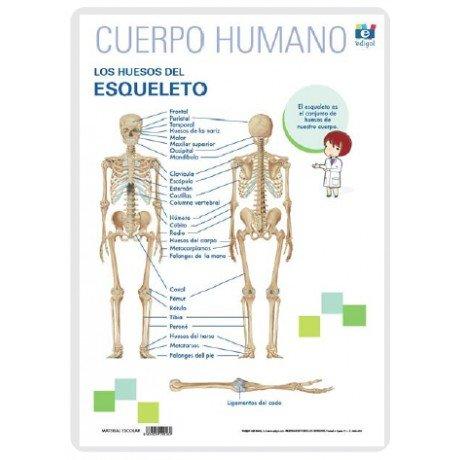 Lamina a3 primaria huesos del esqueleto (42x29)