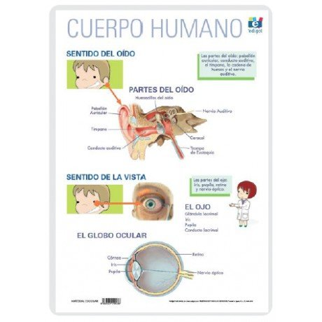 Lamina a3 primaria sentidos oido y vista (42x29)