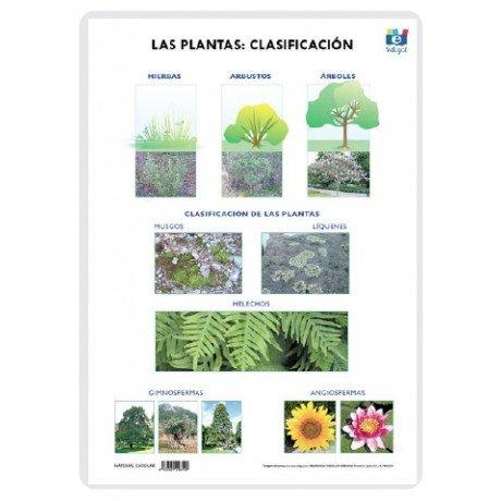 Lamina a3 primaria clasificacion (42x29) las plantas