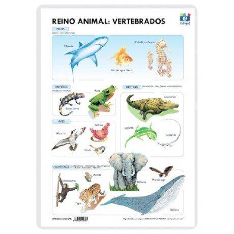 Lamina a3 primaria reino animal vertebrados (42x29)s.vivos