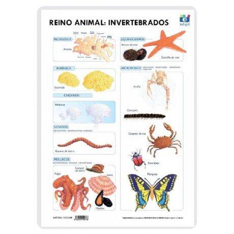 Lamina a3 primaria reino animal invertebrados (42x29)