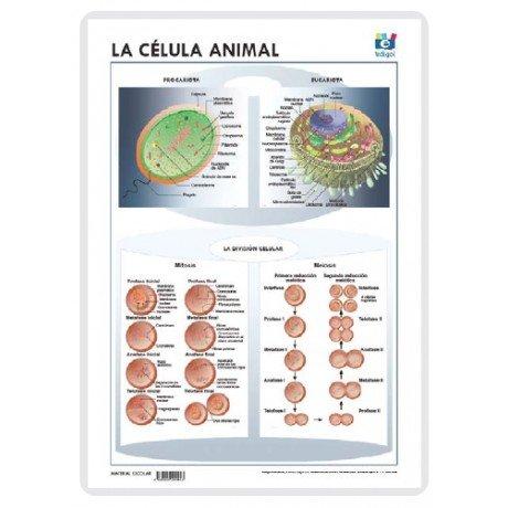 Lamina a3 eso celula animal (42x29) ciencias y ecologia
