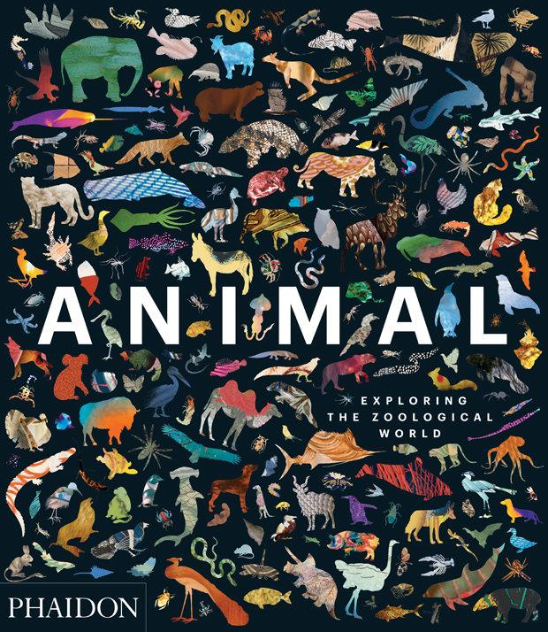 Animal exploring the zoological world