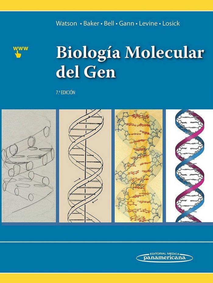 Biologia molecular del gen