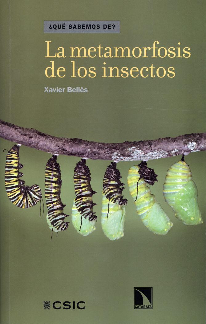 Metamorfosis de los insectos,la