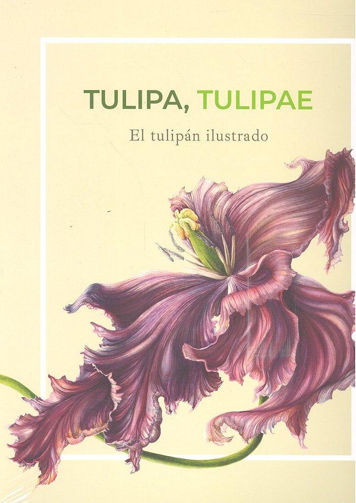 Tulipa tulipae el tulipan ilustrado