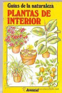 Plantas de interior gn