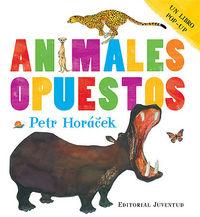 Animales opuestos pop-up