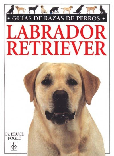 Labrador retriever guia razas perros
