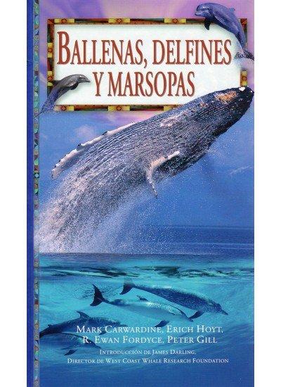 Ballenas delfines y mariposas gf