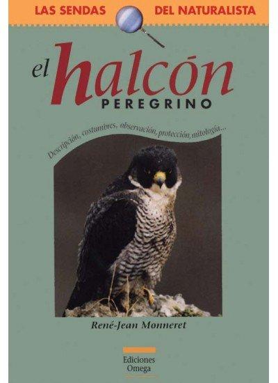 Halcon preregrino