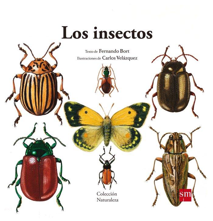 Insectos,los