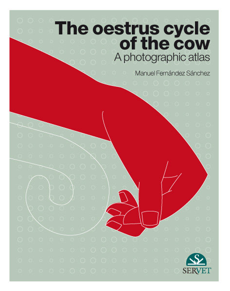 The oestrus cycle of the cow