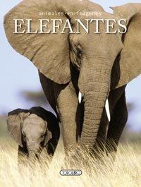 Elefantes animales en imagenes