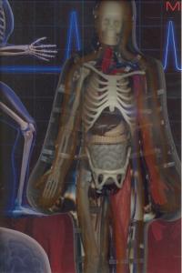 Cuerpo humano xl,el