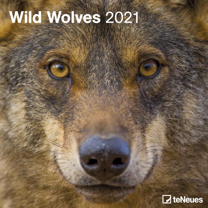 Calendario 2021 wild wolves new 30x30