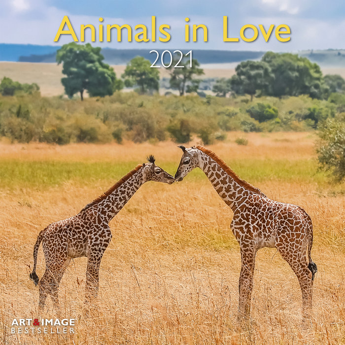 Calendario 2021 animals in love new 30x30