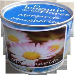 Semillas margarita
